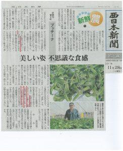 H29.11.28.西日本新聞【プッチーナ:美しい姿 不思議な食感】
